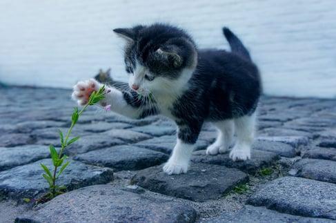 cat-2536662_1920