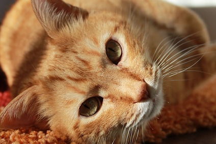 cat-636172_640.jpg