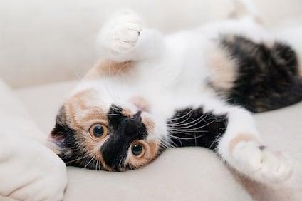 cat-649164_640.jpg