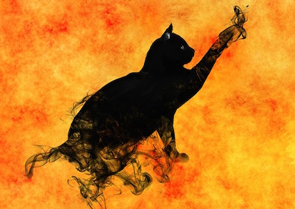 cat-995150_640.jpg