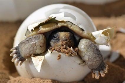 desert-tortoise-987972_640.jpg