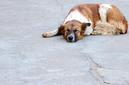 dog-166447_640.jpg