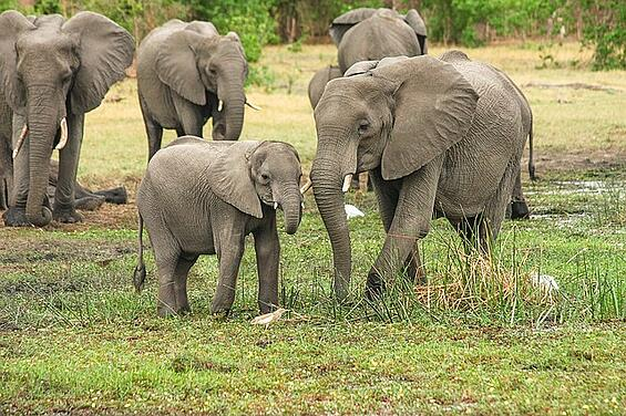elephant-2923917_640