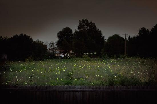 feature-lightning-bug-fireflies