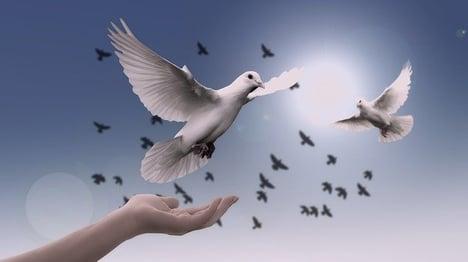 feature-rise-dove-soar-hope-cc0
