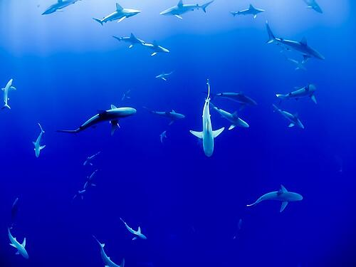 feature-school-of-sharks