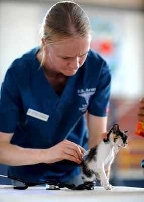 feature-vet-kitten