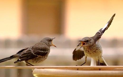 feature_Bird_Argument.jpg
