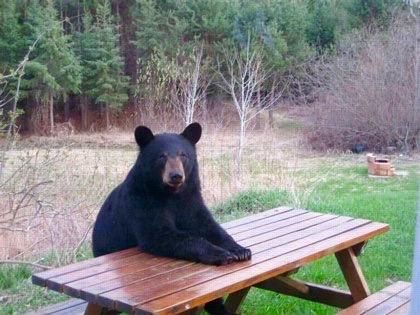 feature_bear