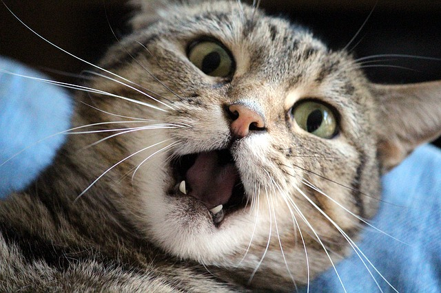 feature_cat.jpg