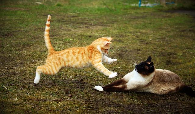 feature_cat_vs_cat.jpg