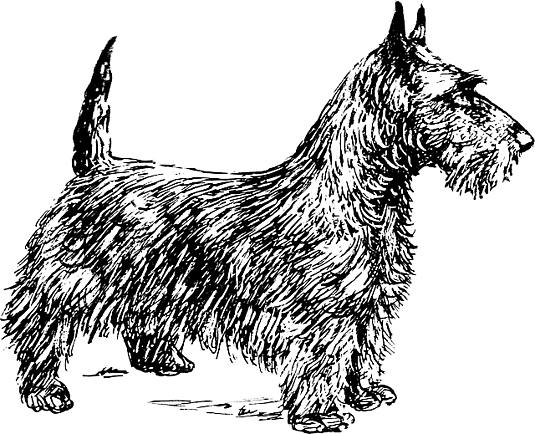 feature_dog