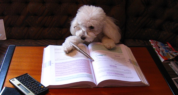 feature_dogstudying.jpg