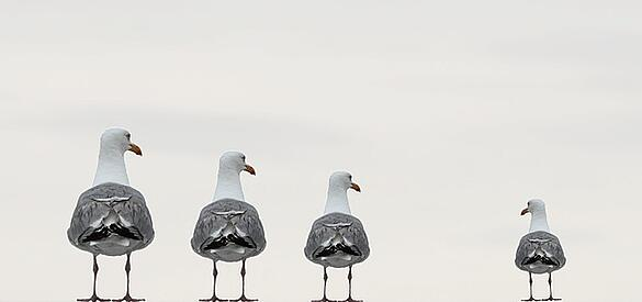 feature_gulls