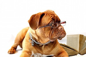 feature_studyingdog.jpg