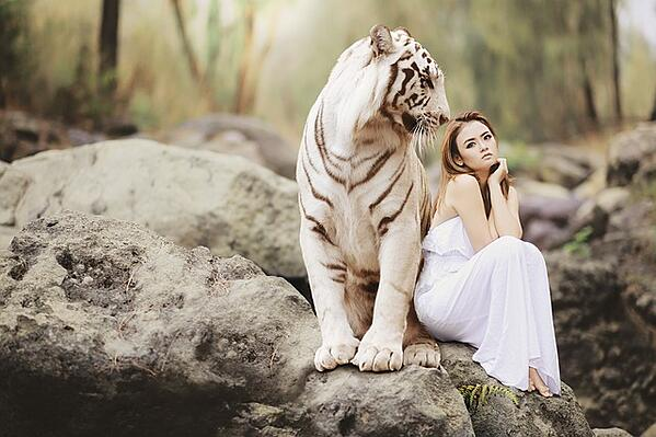 feature_tiger