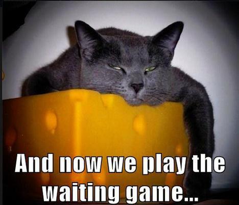 feature_waitinggamecat
