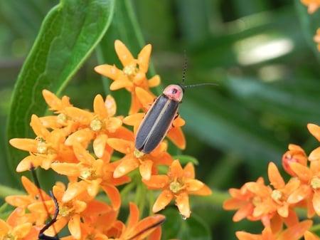 firefly-2466543_640