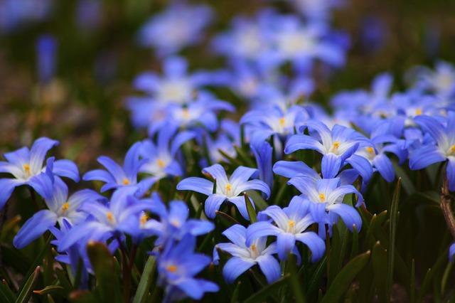 flowers-722095_640.jpg