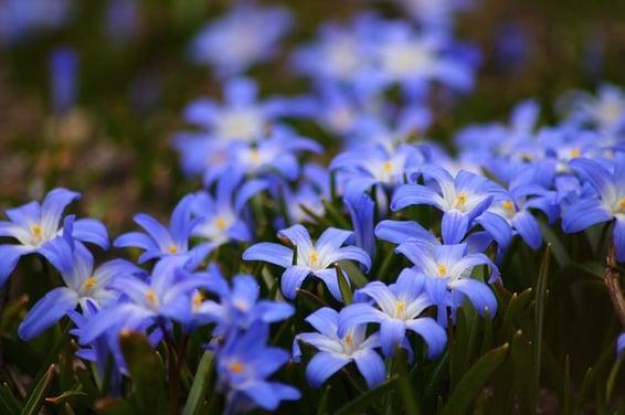 flowers-722095_640