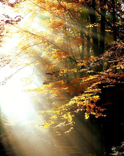 forest-411491_1280.jpg