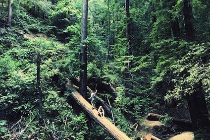 forest-872139_640.jpg