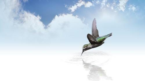 hummingbird-736890_640.jpg