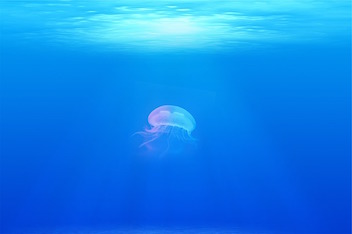 jellyfish-698521_640.jpg