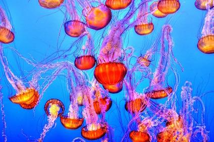 jellyfish-931714_640.jpg