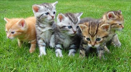 kittens-555822_640-1.jpg