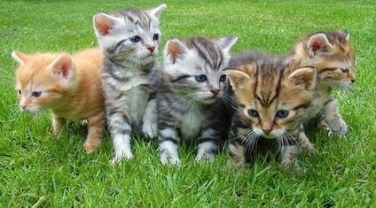 kittens-555822_640.jpg