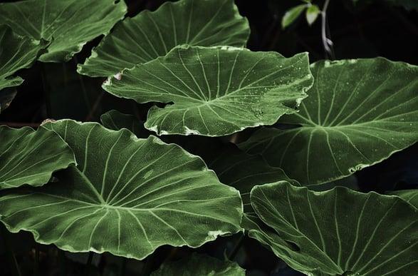 leaf-318743_640