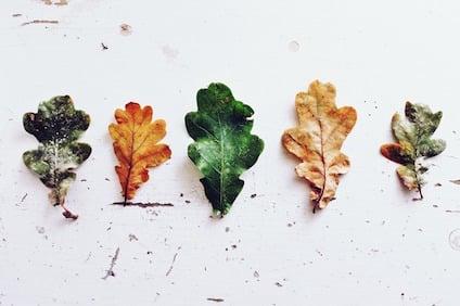leaves-970188_640.jpg