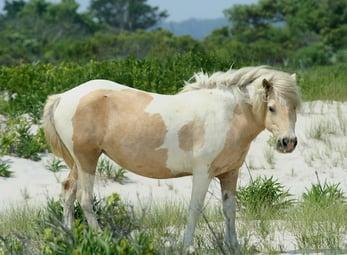 main_pony