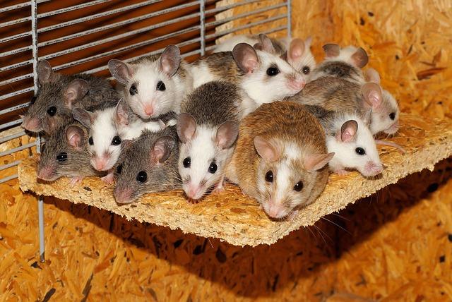 mice-800875_640.jpg