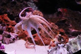 octopus-259740_640.jpg
