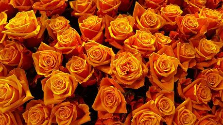 11 rose color meanings to help you pick the perfect bouquet for The meaning of orange roses