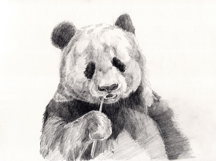 panda-841601_640.jpg