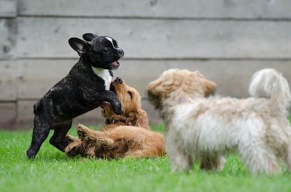 playing-puppies-790638_640.jpg