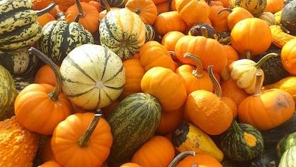 pumpkin-179527_640.jpg