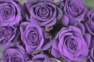 11 Rose Color Meanings to Help You Pick the Perfect Bouquet  One
