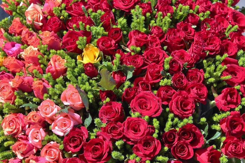 rosegroup1.jpg
