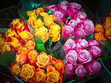 11 rose color meanings to help you pick the perfect bouquet rose color and cost mightylinksfo