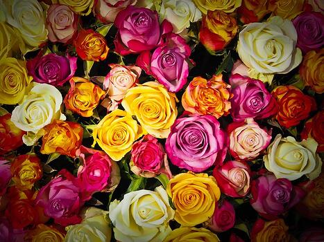 11 rose color meanings to help you pick the perfect bouquet a red rose is a pretty universal symbol of love and passion so universal in fact that the price of red roses can increase by 200 around valentines day mightylinksfo
