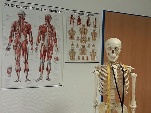 skeleton-645535_640