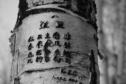 tree-615663_640.jpg