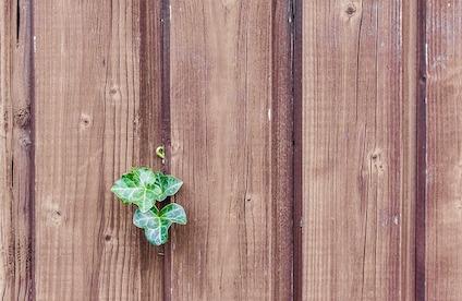 wood-482288_640-1.jpg