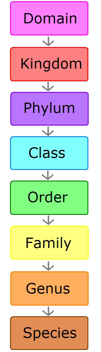 body_classification-1.png
