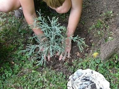 body_gardening