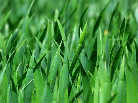 body_grassisgreener.jpg